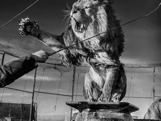Lion Tamers