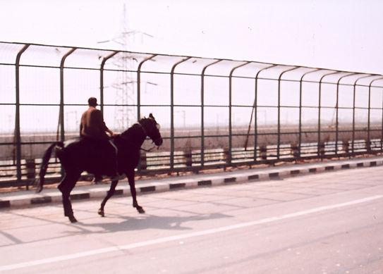 horse_on_ISBT.jpg
