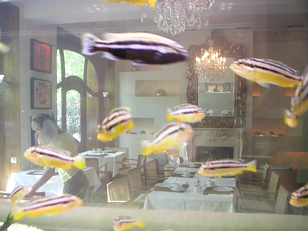 Club del Mar_Aquarium