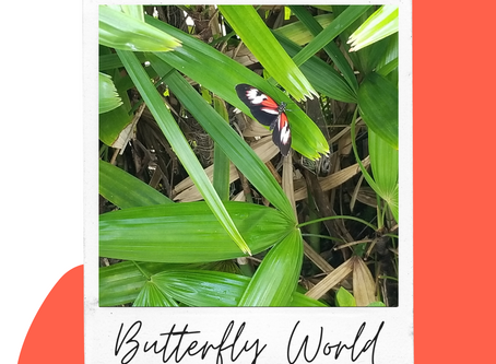 South Florida Attractions: Butterfly World