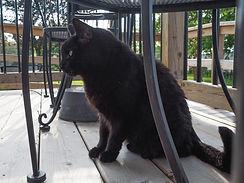 black cat named Shiraz, Sue-Ann Staff Estate Winery, Jordan, Ontario, Canada