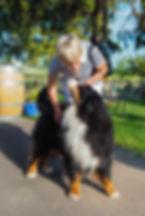Bernese dog 'Brix', Gillian Marx, Sue-Ann Staff Estate Winery, Jordan, Ontario, Canada