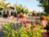flowers, main street of Jordan, Ontario, Canada