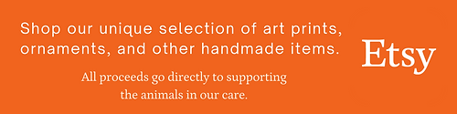 Etsy Button.png