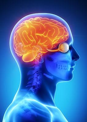 Sistema nervoso central Cerebro e olho.j