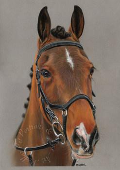 Sarah Brown Pony.jpg