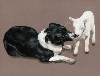Collie & Lamb.jpg