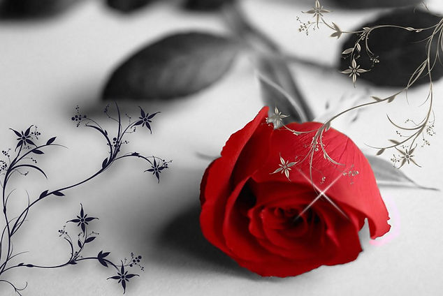 Red Rose Peaceful Funeral Services
