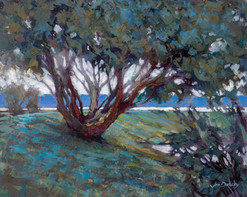 Jed Dorsey - Madrona Dreams (Iverson Beach, Camano Island, WA) - 16x20 - SOLD