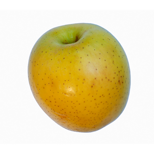 golden ginger apple