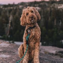 Wilder Dog