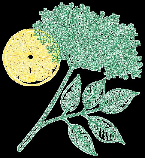 vlier-en-citroen.png