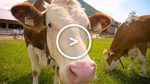 Imagefilm, Marketing Video, Landwirtschaft, Metzgerei