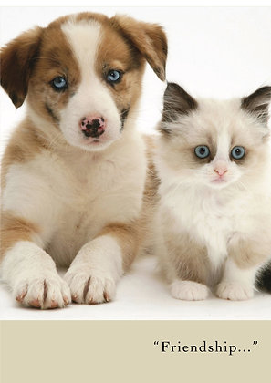Friendship (Cat & Dog)