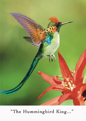 Hummingbird King