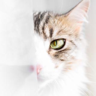 August Window Eye.jpg