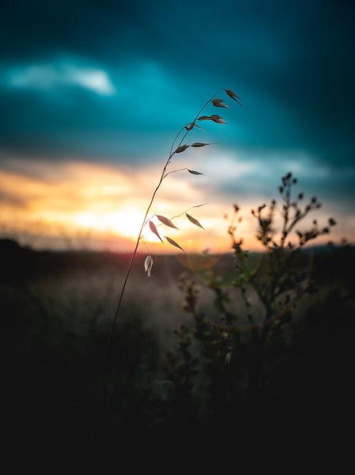 Hayden Sunset
