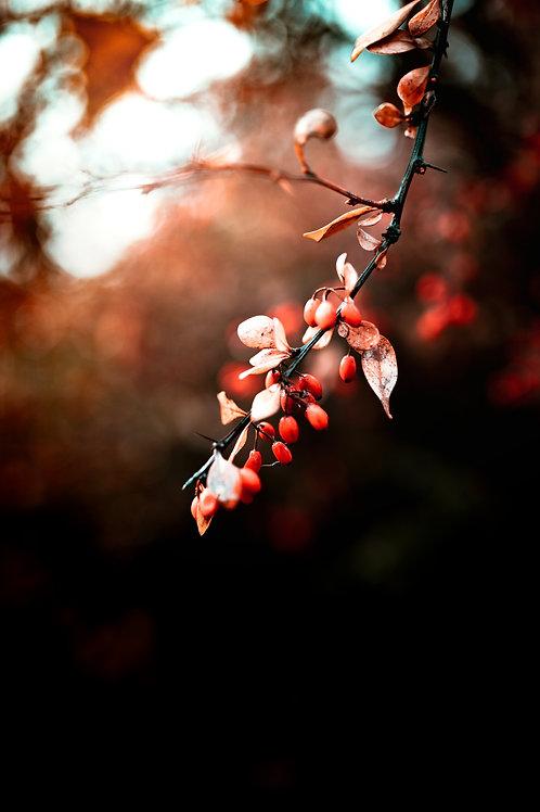 Warm Winter Berries