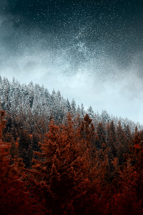 Winter & Autumn