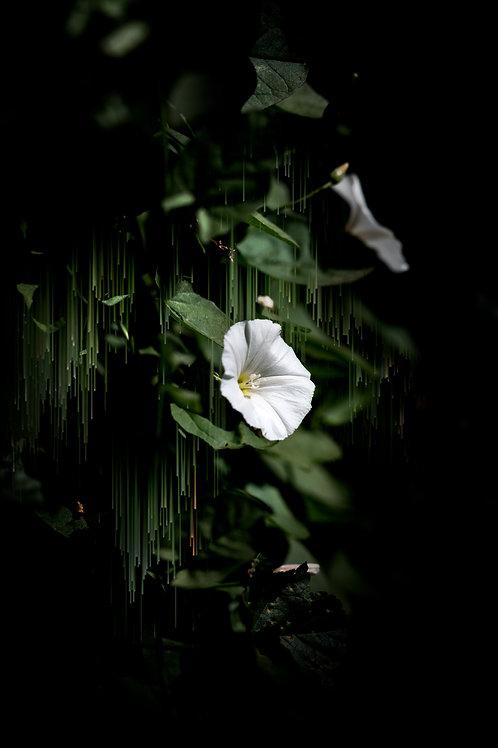 Blossom & Drip