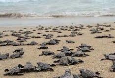 Bioluminiscencia y Liberacion de Tortugas