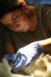 Evcil Hayvanlarda Dış Kulak Yolu İltihabı (Otitis Externa)