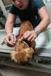 Evcil Hayvanlarda Pireler ve Keneler