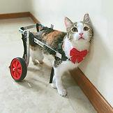 www.yucelenhayvanhastanesi.com-acil-veteriner