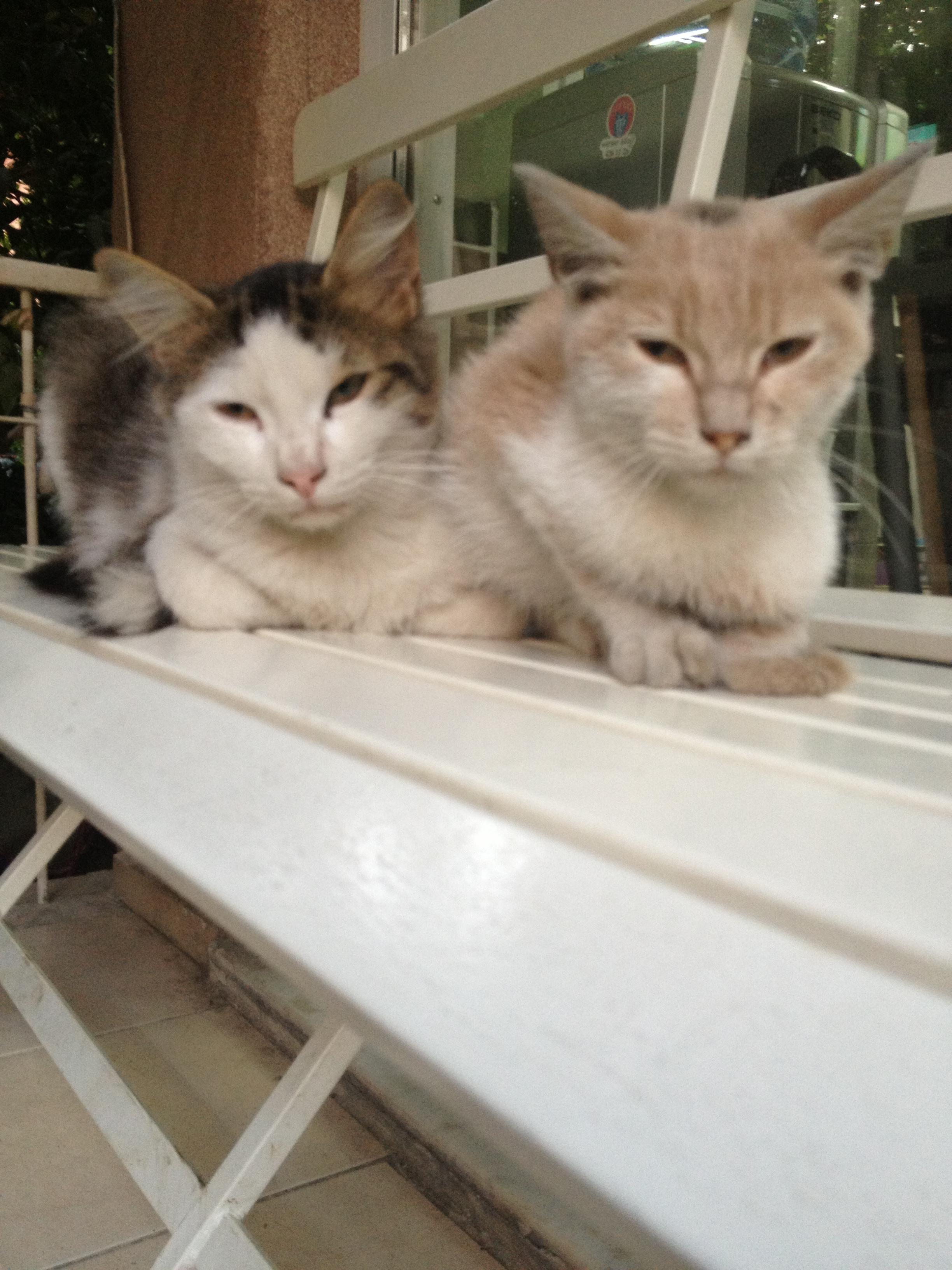 www.monserveteriner.com- pet bakımı 24 saat