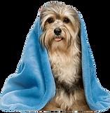 kisspng-dog-grooming-havanese-dog-pet-sh