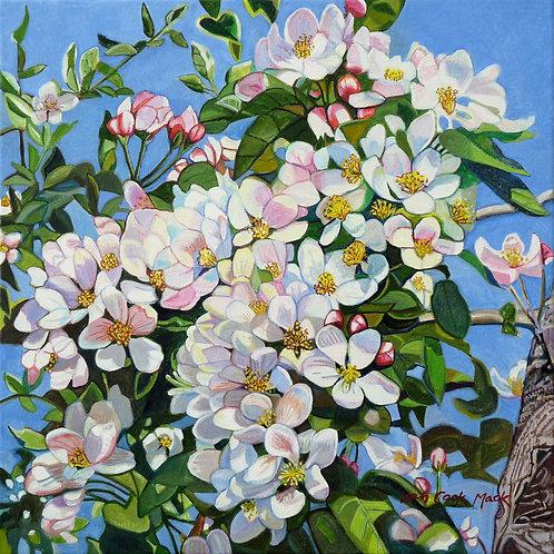 Apple Blossoms Exuberance