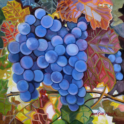 Blue Grapes In Red Leaves
