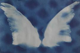 Bird Wings, 2020