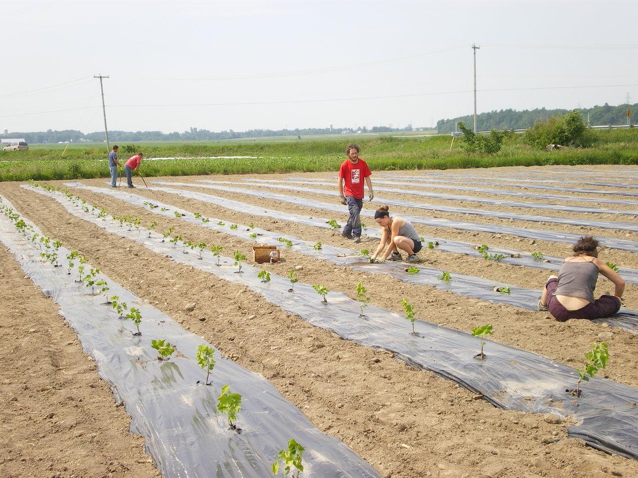 Plantation 2011