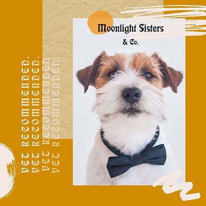 bowtie terrier ig ad.jpg