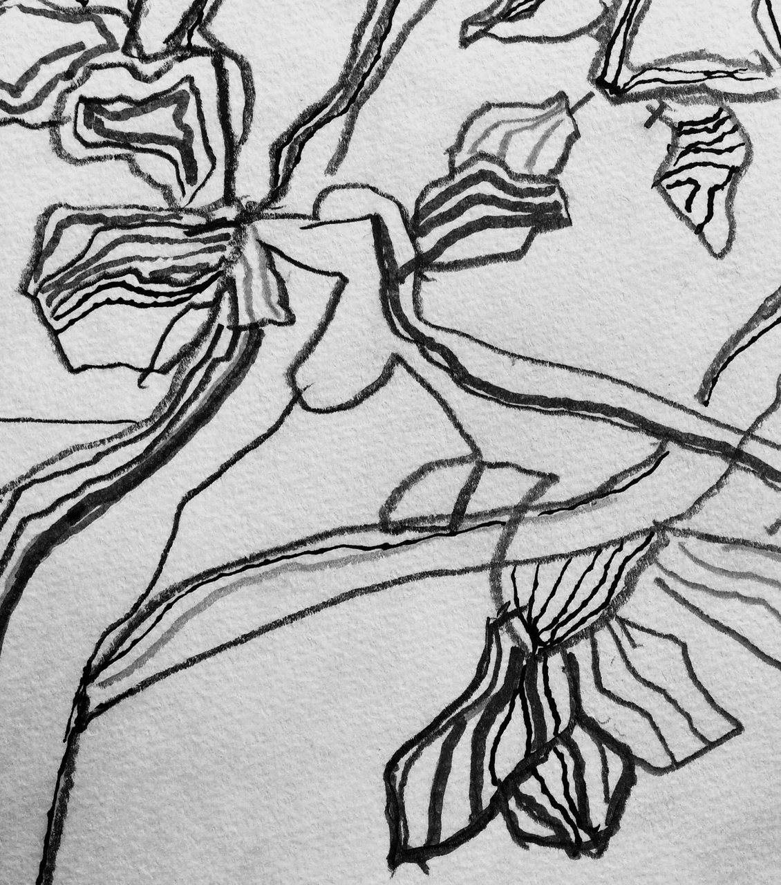 lines of flora graphite
