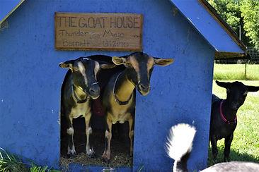 The goat House.jpg
