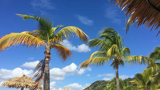 palmtree-shot.jpg