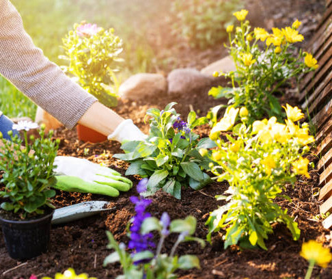 Top 6 Tips for Turning your Garden into a Beautiful Oasis