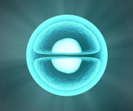 細胞イメージ図