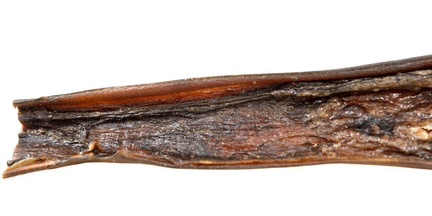 Kamelhaut