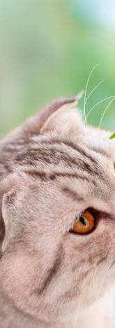 Cannexol CAT 3% CBD Öl