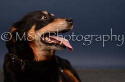 M&N Photography -DSC_4670
