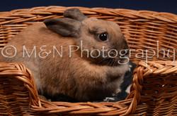 M&N Photography -DSC_0760