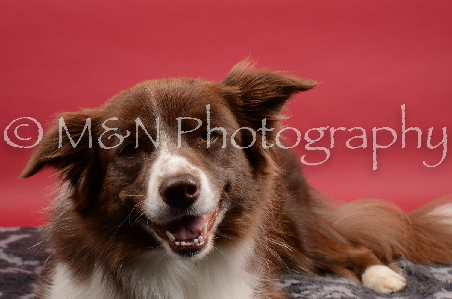 M&N Photography -DSC_8514