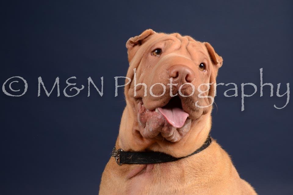 M&N Photography -DSC_0298
