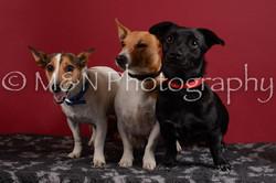 M&N Photography -DSC_3722