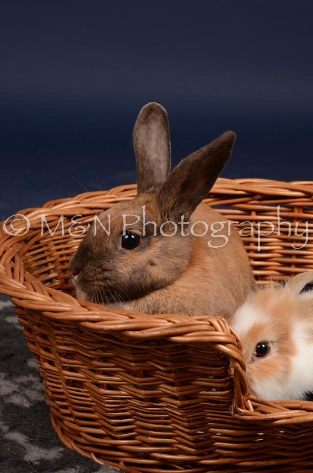 M&N Photography -DSC_0778