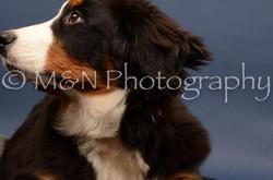 M&N Photography -DSC_4098