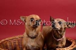 M&N Photography -DSC_8668